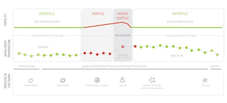 daysy_fertility-chart_en.jpg__992x450_q90_crop_upscale